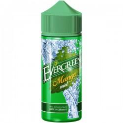 Mango Mint Aroma Evergreen
